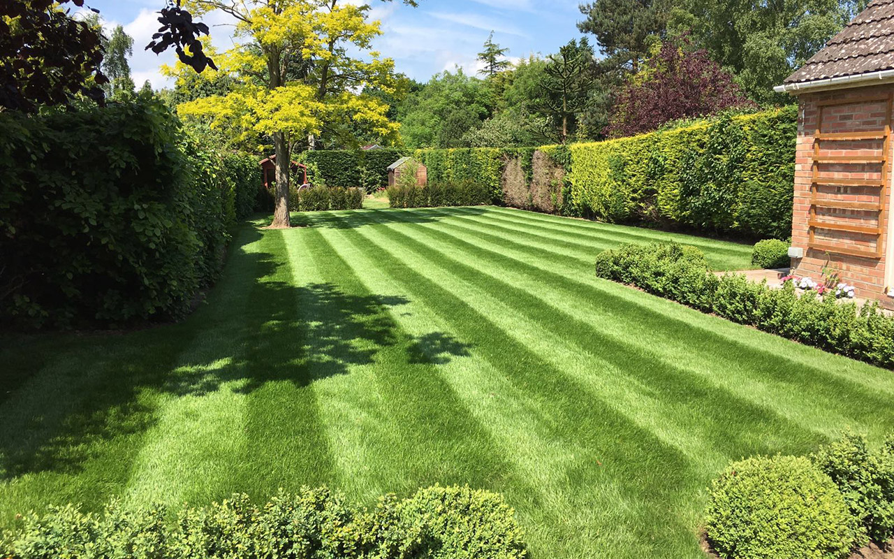 Garden Services Belfast - Grass Treatment Belfast